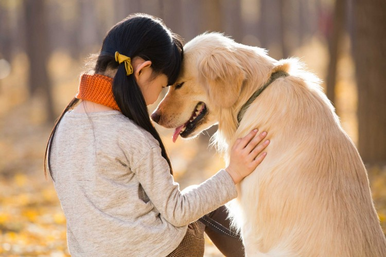 how-to-choose-the-perfect-dog-breed-just-for-you-based-on-your-character-a-complete-guide-by-bemorepanda