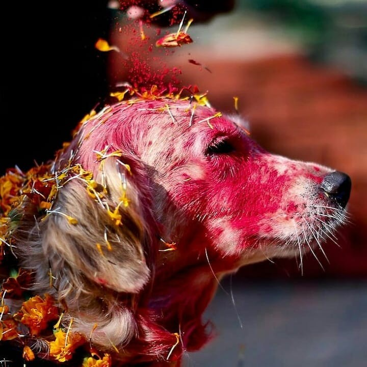 2020-kukur-tihar-festival-best-50-cute-photos-where-dogs-are-worshiped-and-thanked-for-their-loyalty