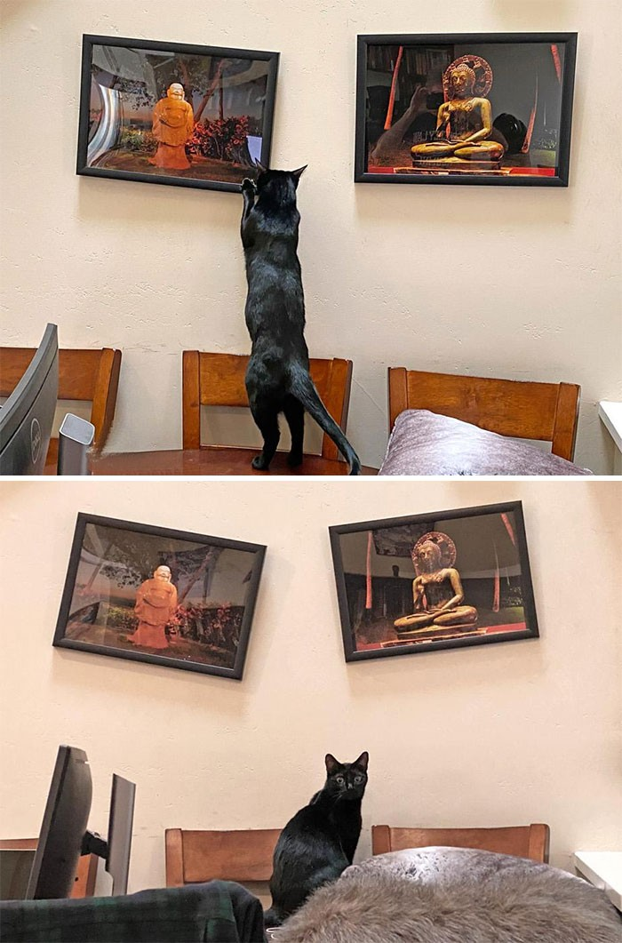 20-hilarious-photos-that-prove-cats-are-the-biggest-fools
