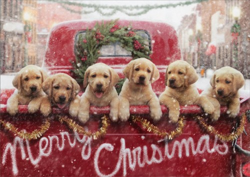 50-adorable-photos-with-dogs-that-you-cannot-miss-in-december