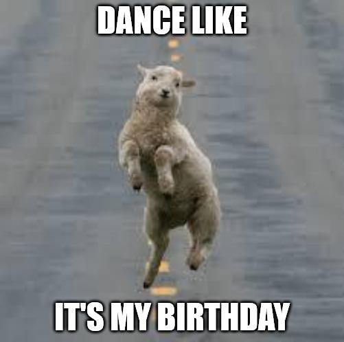 Dance like it's my birthday Dancing sheep meme
