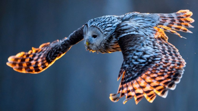 2021-national-bird-day-fun-and-interesting-facts-to-know