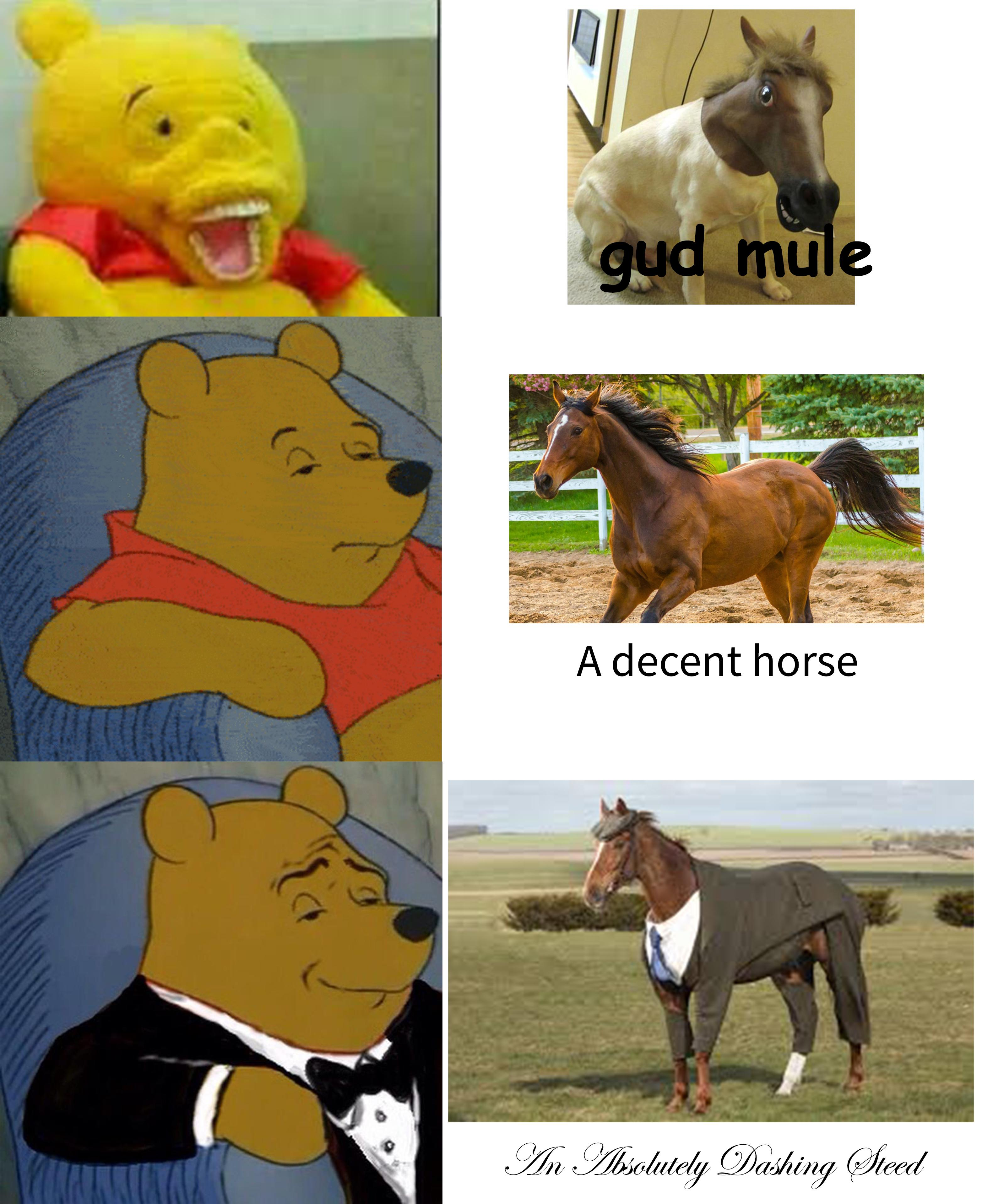 Funny Tuxedo Winnie Pooh meme with mules and captions