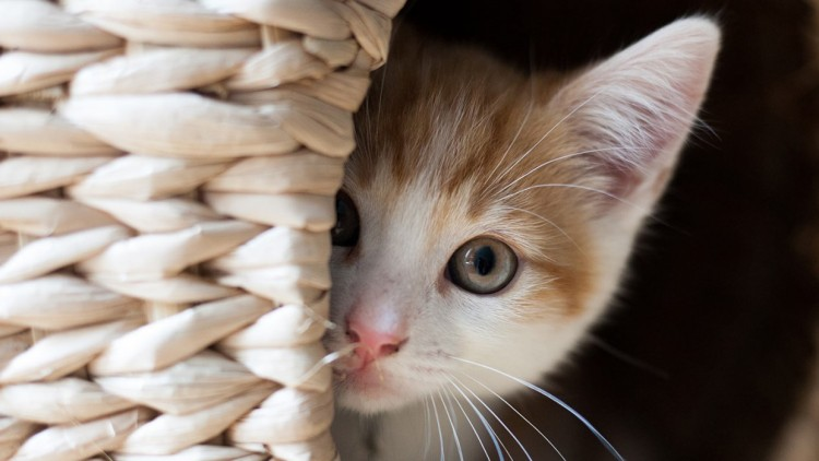 40-most-adorable-and-cute-cats-this-month-bemorepanda