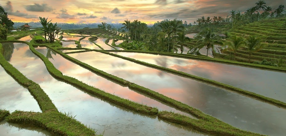 A Nature Lover's Guide to Bali