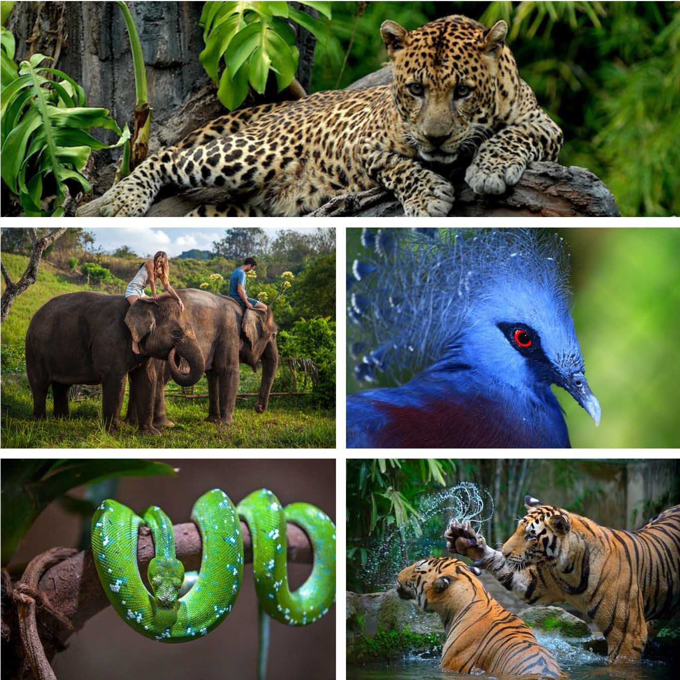 Bali's Wild Side | Ultimate Bali