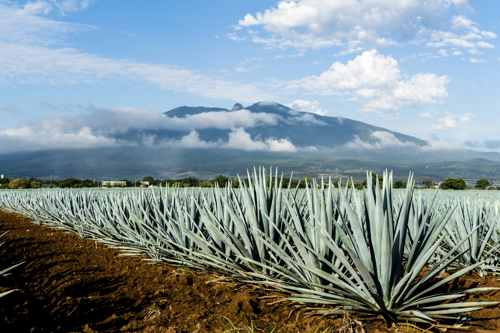 Mexico's Tequila Shortage Might Be Over Soon | Fortune