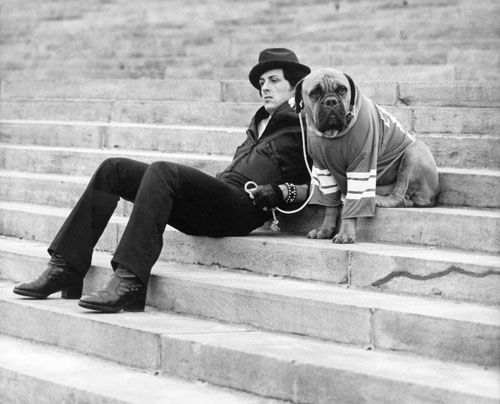 ROCKY / Sylvester Stallone...Rocky trivia: this was Stallone dog in real  life, they used him for the movie. | Rocky film, Sylvester stallone, Rocky  balboa