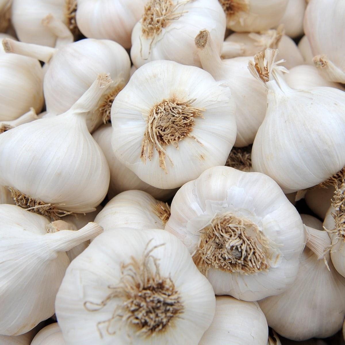 "Картинки по запросу ""garlic"""
