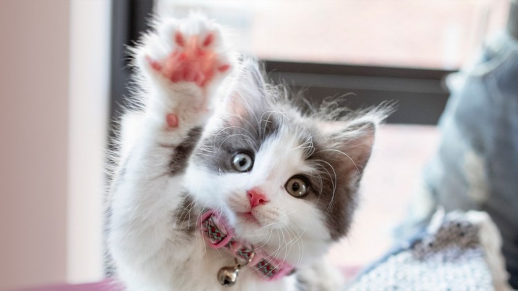 30-cute-pictures-with-cats-for-this-week-that-are-so-adorable-which-will-make-you-aww