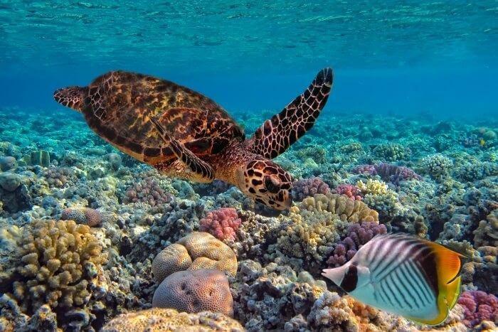 "Картинки по запросу ""fiji islands fauna"""