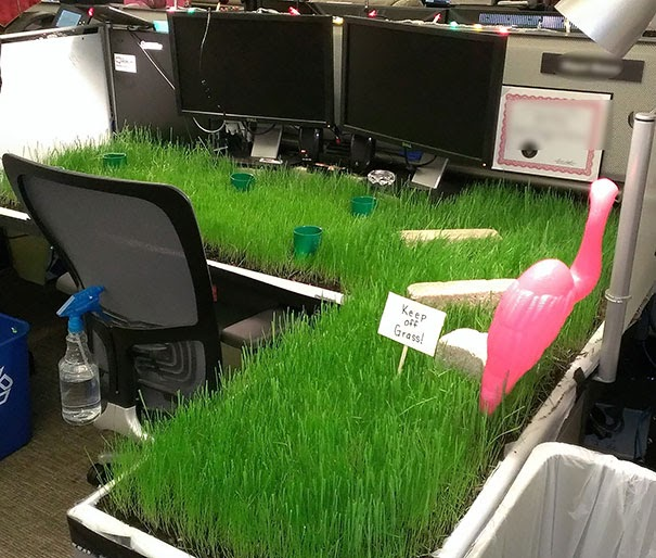 Plant Your Own Lawn In The Office