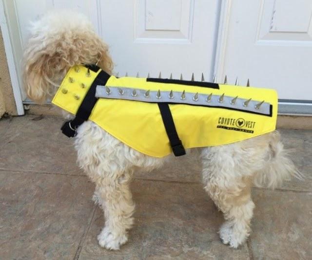 Purchase > predator vest dog, Up to 71% OFF