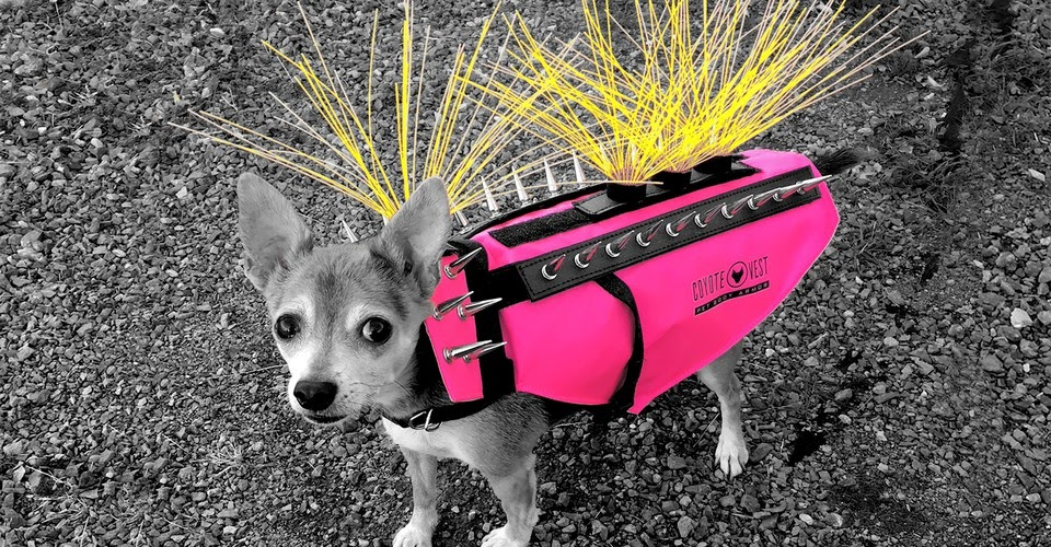 Meet the Dog With the Viral Spiky Coyote Vest - The Atlantic