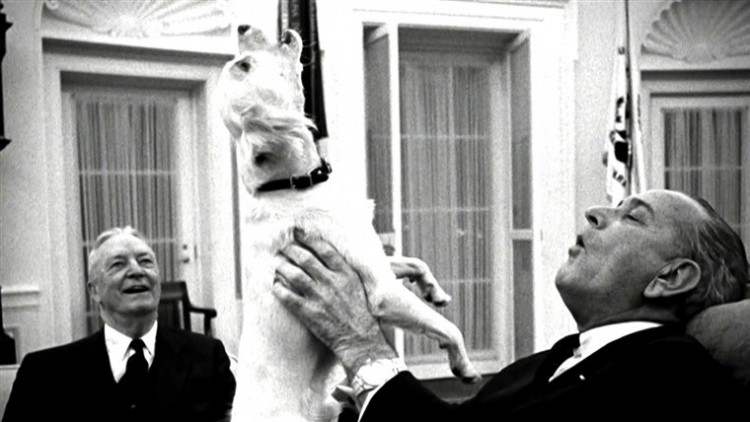 here-are-the-fluffy-friends-of-the-presidents-of-america-meet-the-animals-that-lived-in-the-white-house-and-were-true-companions
