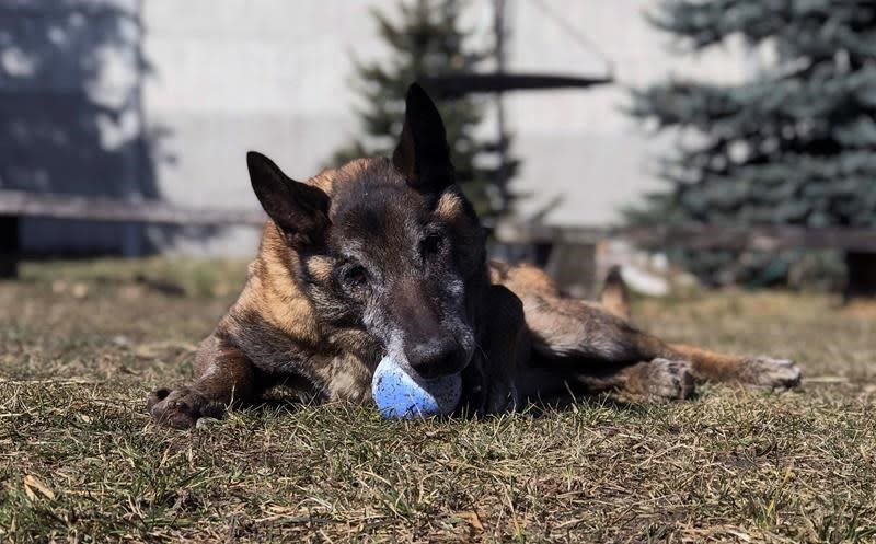 Poland plans pensions for dogs, horses in state employment