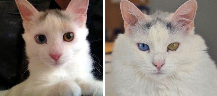 20-kittens-who-turned-into-majestic-cats-by-showing-how-fast-time-flies