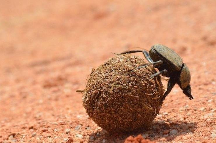10-most-powerful-animals-on-the-planet-and-you-can-hardly-guess-the-strongest-of-them