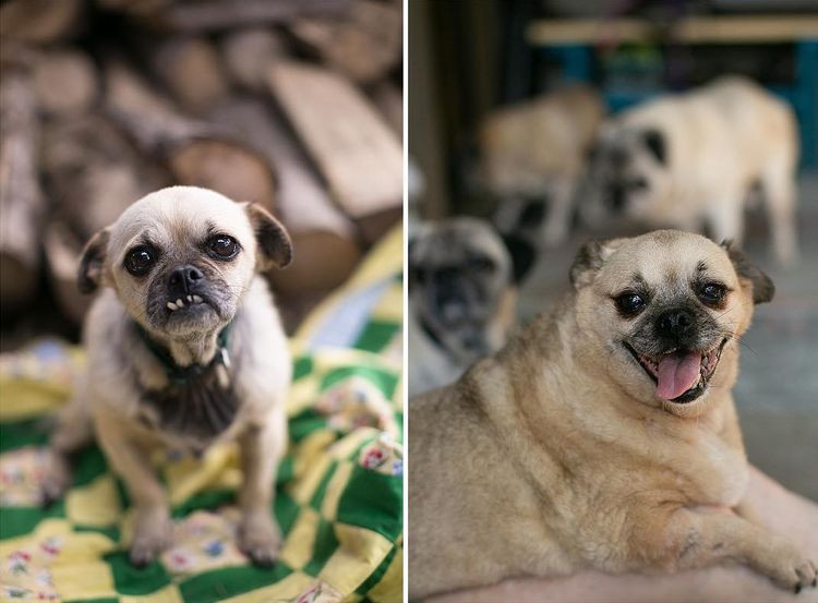 20-shots-of-rescued-animals-who-are-happy-to-find-a-home-so-they-screech-and-smile