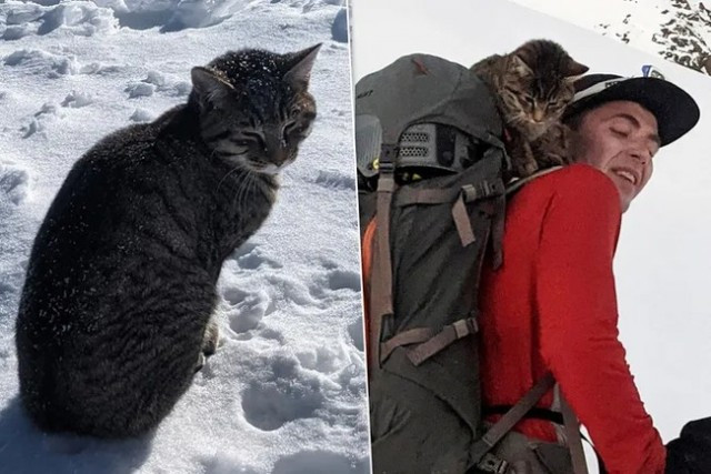 the-cat-nailed-to-the-climbers-and-overcame-an-altitude-of-3-km-to-return-home