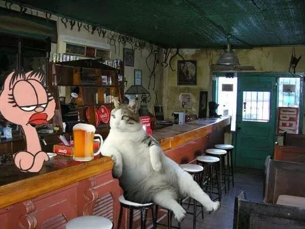 Стамбульский кот Томбили