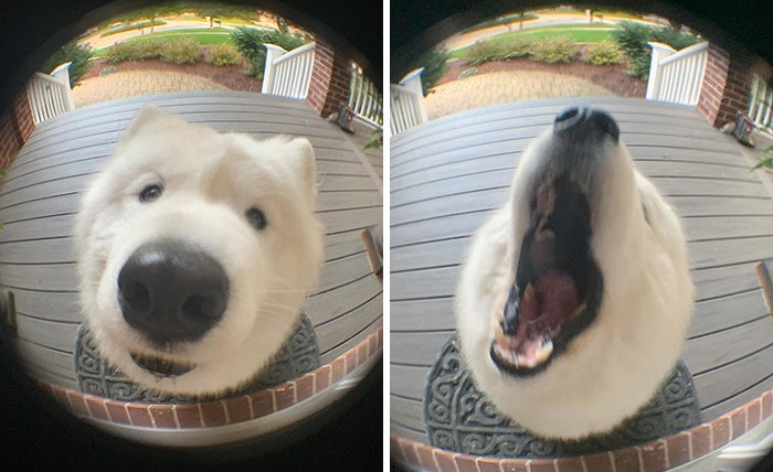 20-photos-of-funny-dogs-whose-playful-faces-and-funny-antics-will-make-you-smile