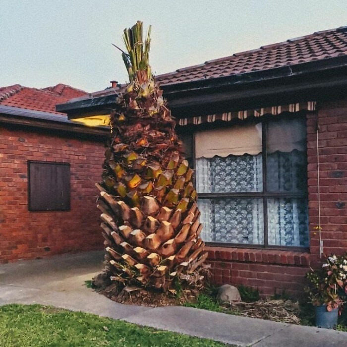 20-unexpected-and-even-wild-things-that-can-be-seen-in-the-gardens-and-yards-of-people